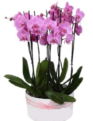 Beyaz seramik içerisinde 7 dallı mor orkide  Nevşehir kaliteli taze ve ucuz çiçekler