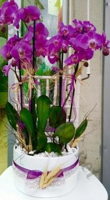Seramik vazoda 4 dallı mor lila orkide  Nevşehir çiçek , çiçekçi , çiçekçilik