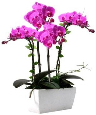 Seramik vazo içerisinde 4 dallı mor orkide  Nevşehir güvenli kaliteli hızlı çiçek