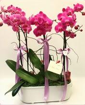 Beyaz seramik içerisinde 4 dallı orkide  Nevşehir online çiçekçi , çiçek siparişi