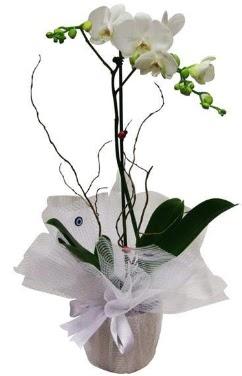 Tek dallı beyaz orkide  Nevşehir ucuz çiçek gönder