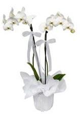 2 dallı beyaz orkide  Nevşehir cicekciler , cicek siparisi