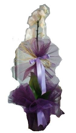 Tek dallı beyaz orkide süper kalite ithal  Nevşehir çiçek gönderme sitemiz güvenlidir