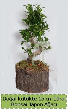 Doğal kütükte İthal bonsai japon ağacı  Nevşehir çiçek mağazası , çiçekçi adresleri