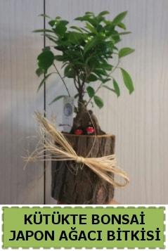 Kütük içerisinde doğal bonsai ağacı  Nevşehir kaliteli taze ve ucuz çiçekler