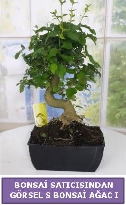 S dal eğriliği bonsai japon ağacı  Nevşehir güvenli kaliteli hızlı çiçek