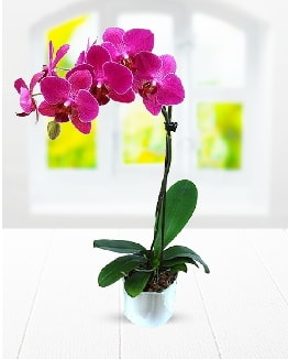Tek dallı mor orkide  Nevşehir güvenli kaliteli hızlı çiçek