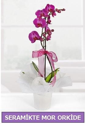 Seramik içerisinde birinci kalite tek dallı mor orkide  Nevşehir hediye sevgilime hediye çiçek