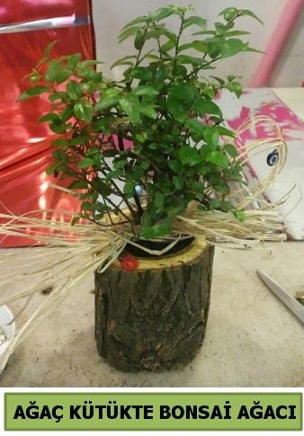 Doğal ağaç kütük içerisinde bonsai ağacı  Nevşehir çiçek online çiçek siparişi