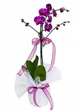 Tekli Mor Orkide  Nevşehir çiçek servisi , çiçekçi adresleri