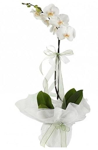 Tekli Beyaz Orkide  Nevşehir çiçek yolla , çiçek gönder , çiçekçi