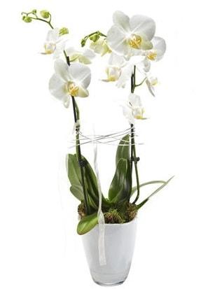 2 dallı beyaz seramik beyaz orkide saksısı  Nevşehir çiçek online çiçek siparişi