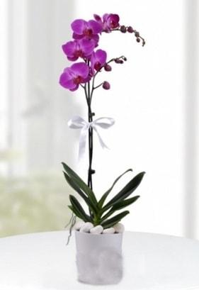 Tek dallı saksıda mor orkide çiçeği  Nevşehir çiçek gönderme