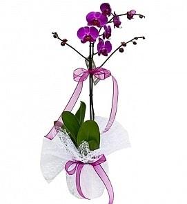 Tek dallı saksıda ithal mor orkide çiçeği  Nevşehir çiçek gönderme