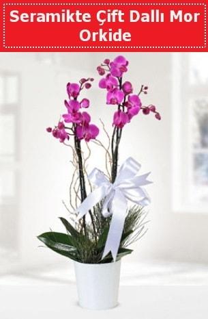 Seramikte Çift Dallı Mor Orkide  Nevşehir internetten çiçek satışı