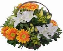 Nevşehir 14 şubat sevgililer günü çiçek  sepet modeli Gerbera kazablanka sepet